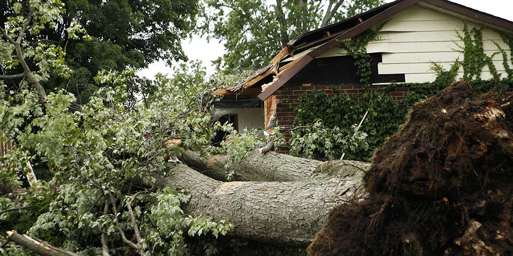 storm-damage-treefall