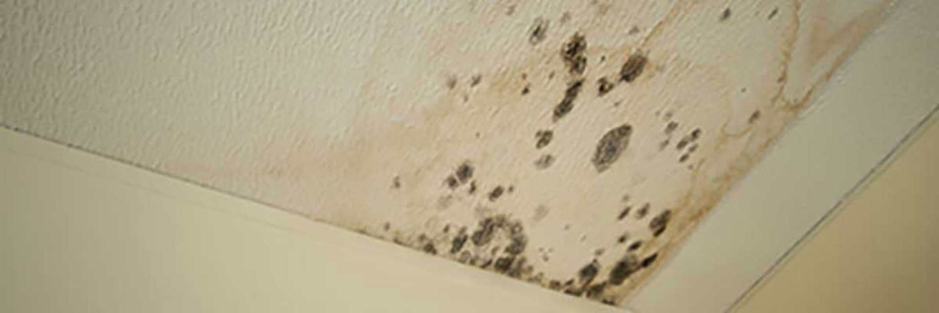 mold-on-ceiling